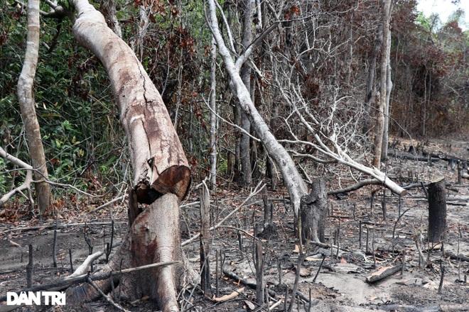 Phá rừng, 2 đối tượng bị khởi tố - Phú Yên - 2021-Trung Thi-1.jpeg