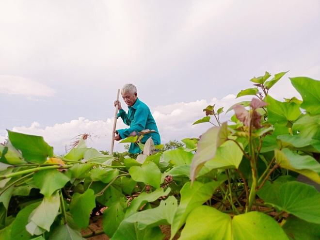 Ông bố gà trống nuôi con làm mảnh vườn gần 4.000m2 ở Bình Thuận - 1