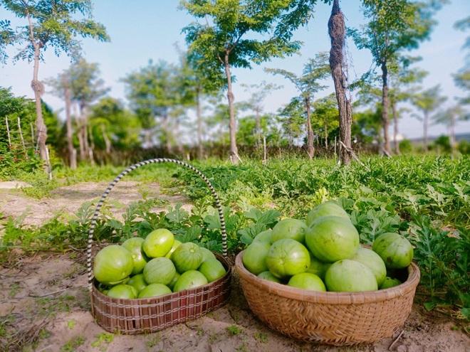 Ông bố gà trống nuôi con làm mảnh vườn gần 4.000m2 ở Bình Thuận - 5