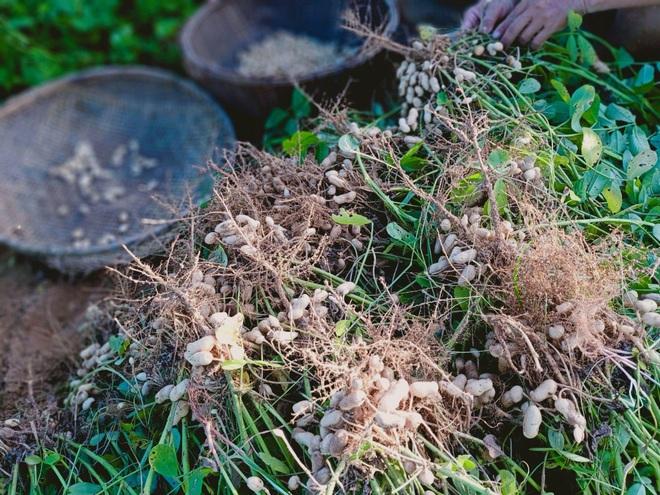 Ông bố gà trống nuôi con làm mảnh vườn gần 4.000m2 ở Bình Thuận - 7