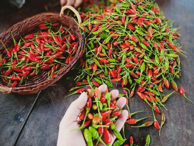 Ông bố gà trống nuôi con làm mảnh vườn gần 4.000m2 ở Bình Thuận - 9