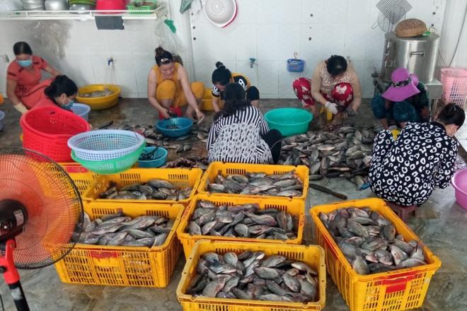 Tất bật làm gần tấn cá hỗ trợ bữa ăn cho dân về từ vùng dịch  - 1