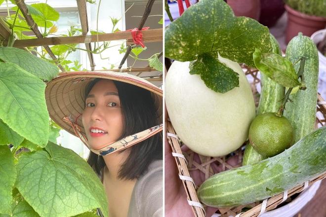 Vợ chồng Hà Nội vác 100 bao đất lên sân thượng, làm vườn hữu cơ xanh mướt - 3