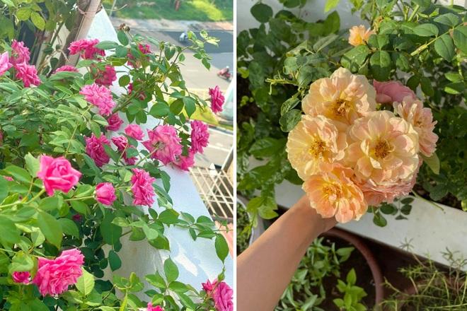 Vợ chồng Hà Nội vác 100 bao đất lên sân thượng, làm vườn hữu cơ xanh mướt - 4