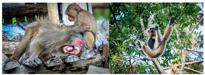 Một ngày vào vai nhà động vật học giữa thiên đường hoang dã Vinpearl Safari - 1