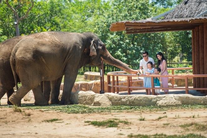 Một ngày vào vai nhà động vật học giữa thiên đường hoang dã Vinpearl Safari - 2
