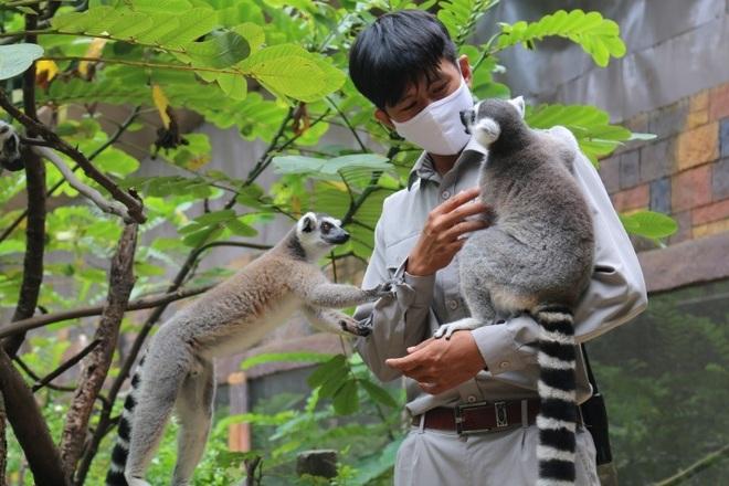 Một ngày vào vai nhà động vật học giữa thiên đường hoang dã Vinpearl Safari - 3