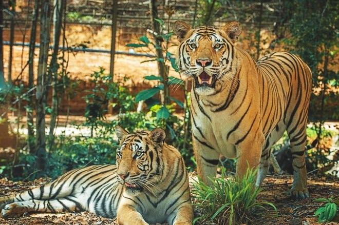 Một ngày vào vai nhà động vật học giữa thiên đường hoang dã Vinpearl Safari - 4