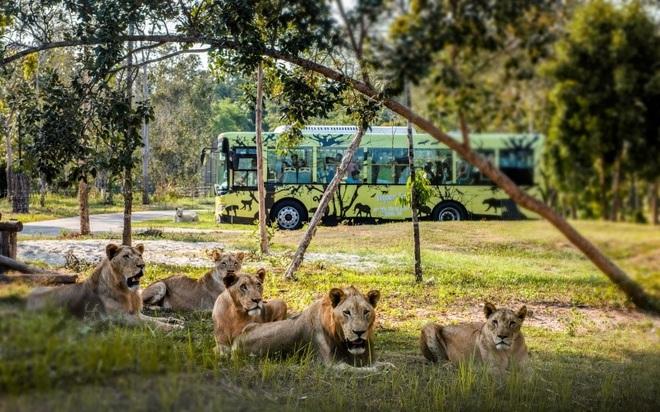 Một ngày vào vai nhà động vật học giữa thiên đường hoang dã Vinpearl Safari - 5