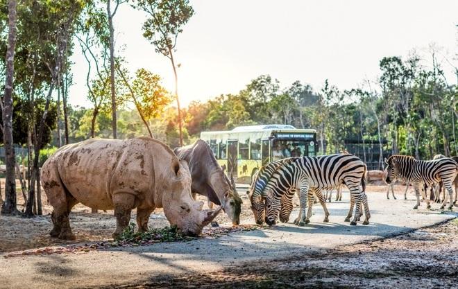 Một ngày vào vai nhà động vật học giữa thiên đường hoang dã Vinpearl Safari - 6