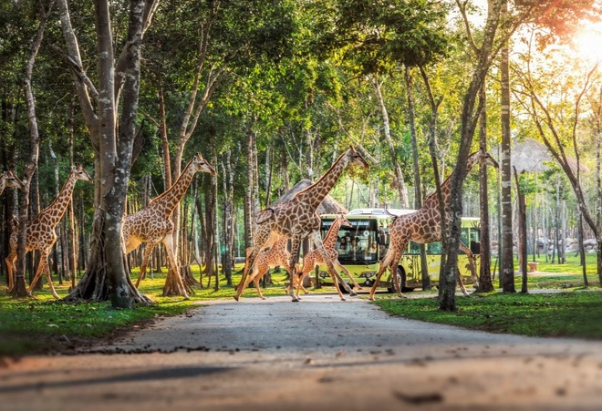 Một ngày vào vai nhà động vật học giữa thiên đường hoang dã Vinpearl Safari - 7