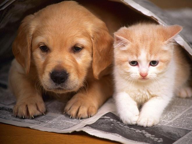 Chó, mèo có thể lây Covid-19 sang người không? - 2