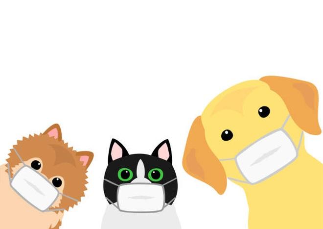 Chó, mèo có thể lây Covid-19 sang người không? - 3