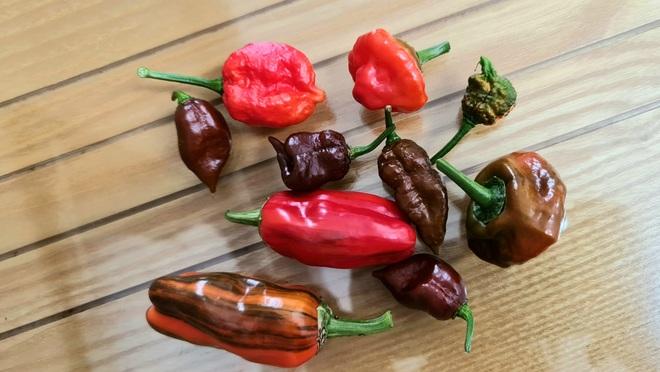 Hướng dẫn viên du lịch làm vườn trồng hàng chục giống ớt độc lạ ở Sài Gòn - 7