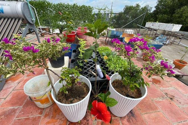 Nghỉ dịch ở nhà, gia đình Đồng Nai làm vườn rau trái đủ ăn khỏi lo đi chợ - 2