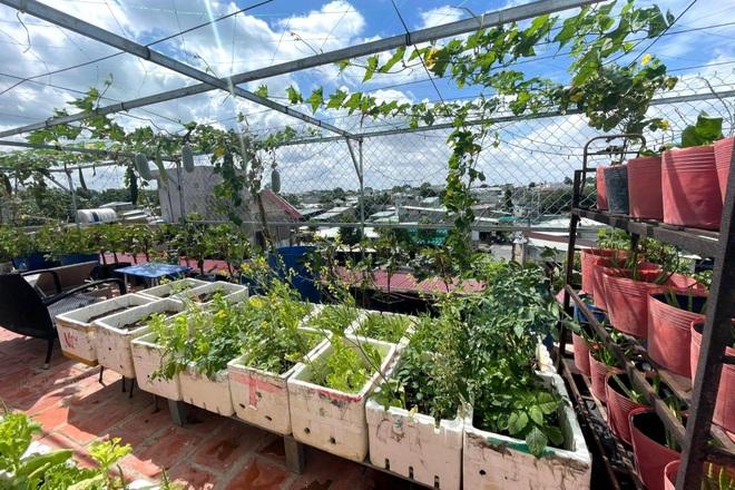 Nghỉ dịch ở nhà, gia đình Đồng Nai làm vườn rau trái đủ ăn khỏi lo đi chợ - 3