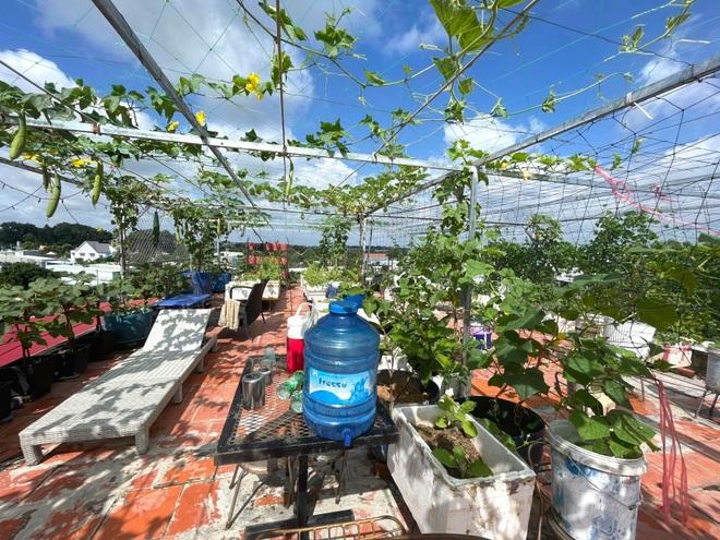 Nghỉ dịch ở nhà, gia đình Đồng Nai làm vườn rau trái đủ ăn khỏi lo đi chợ - 1