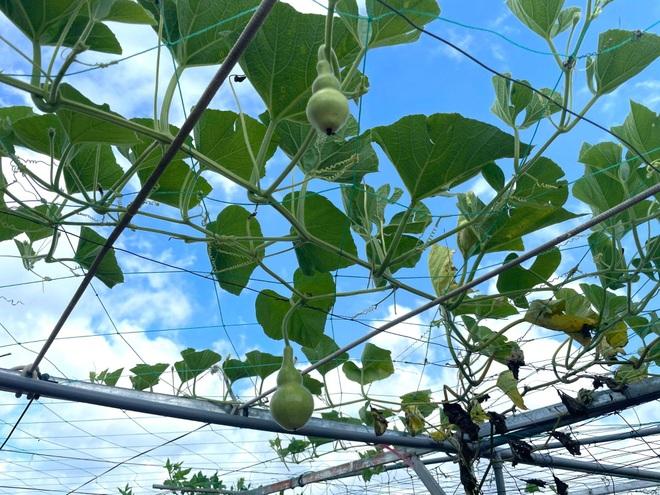 Nghỉ dịch ở nhà, gia đình Đồng Nai làm vườn rau trái đủ ăn khỏi lo đi chợ - 4