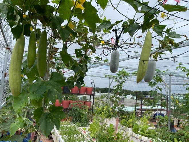 Nghỉ dịch ở nhà, gia đình Đồng Nai làm vườn rau trái đủ ăn khỏi lo đi chợ - 8