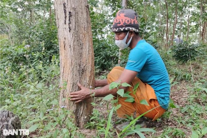 Làng nghèo sở hữu gia tài tiền tỷ nhờ cây rừng quý mọc trên đất rẫy - 3