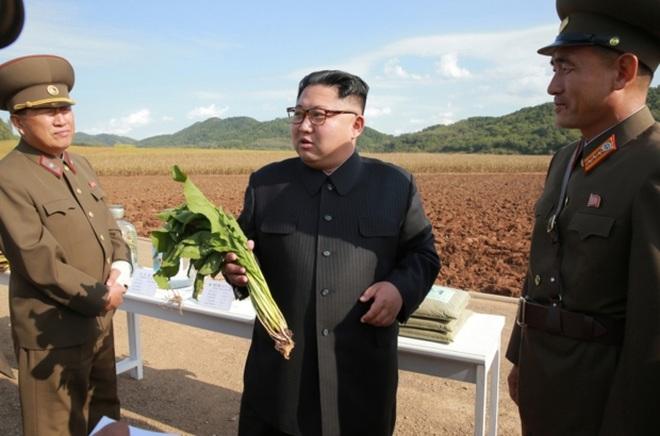 Vì sao Triều Tiên đối mặt nguy cơ nạn đói? - 1