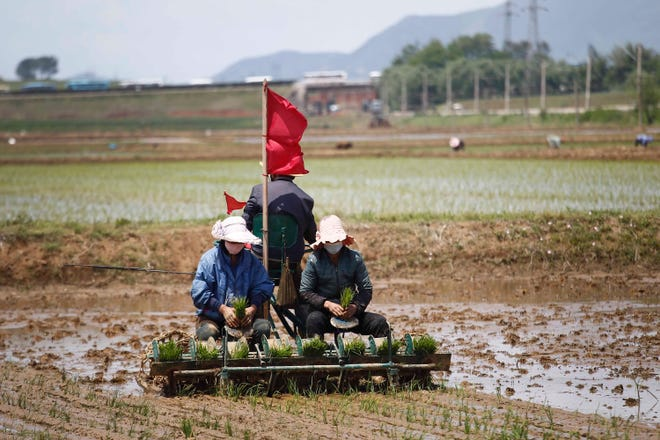 Vì sao Triều Tiên đối mặt nguy cơ nạn đói? - 2