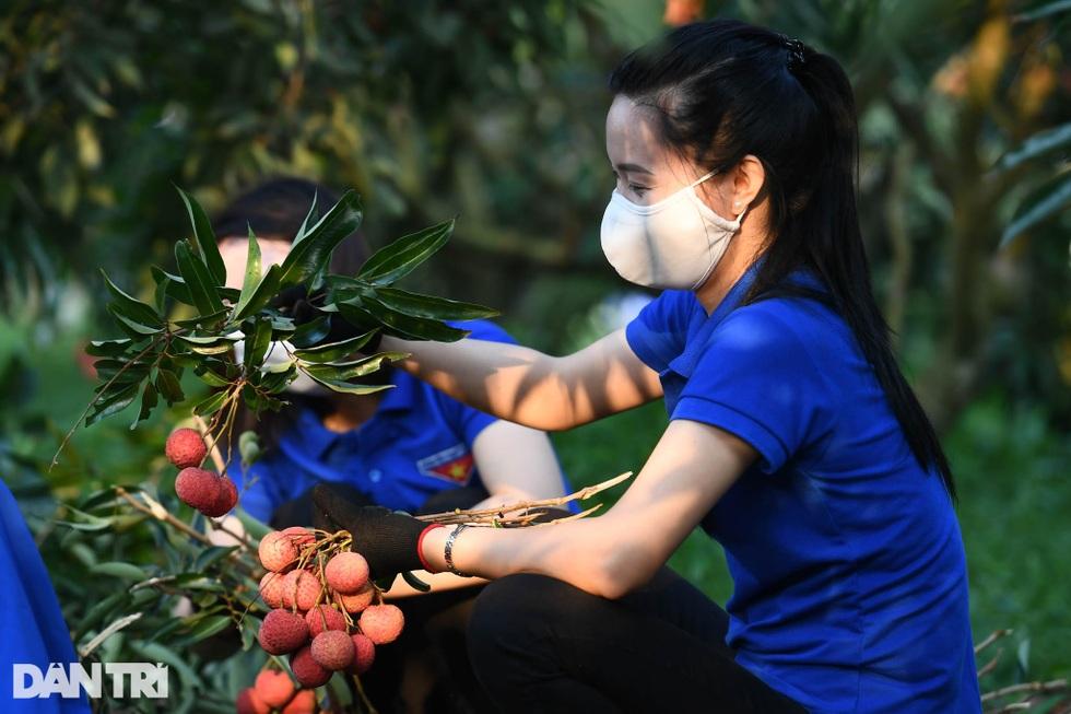 Công an huyện Lục Ngạn leo đồi, đi thuyền giúp nông dân thu hoạch vải - 11