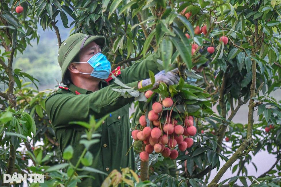 Công an huyện Lục Ngạn leo đồi, đi thuyền giúp nông dân thu hoạch vải - 3
