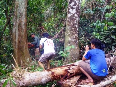 Nỗi đau của rừng - Uyên Phong (Đài PTTH Nghệ An)