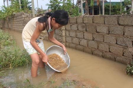 Cô bé đãi bùn đất ra khỏi lúa giúp bố mẹ