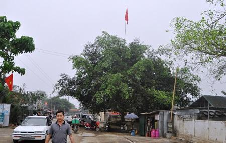 Cây đa Cồn Chùa - nơi gắn liền với hoạt động cách mạng của chi bộ Đảng Môn Sơn