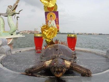 Rợn người chứng kiến cảnh giết rùa sống cúng tế trước hồ Tây