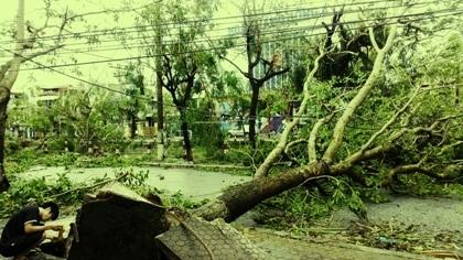Cây đổ la liệt tại TP Thái Bình (Ảnh: Anh Thế).