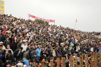 Hàng nghìn người đổ về Hải Lựu xem các ông trâu đấu sừng.