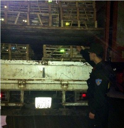 Xe chở hàng tấn mèo bị bắt giữ tại Quảng Ninh.