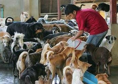 Thịt chó là món ăn khoái khẩu của nhiều người