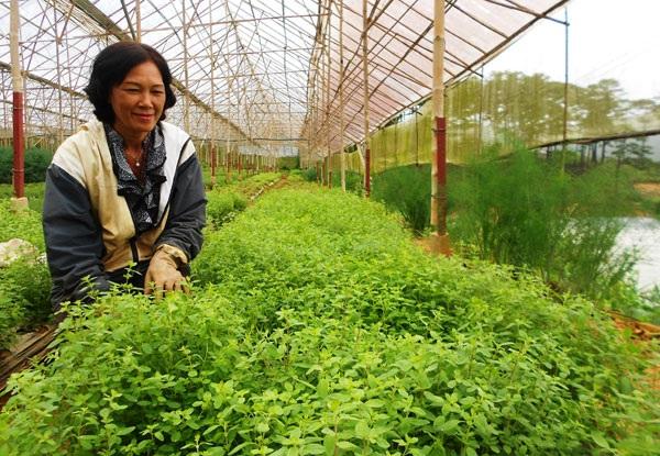Bà Phạm Thị Thu Cúc bên luống rau thơm châu Âu tại buôn làng Đạ Nghịt