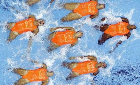 Những hình ảnh thể thao ngoạn mục nhất năm 2011 - 9