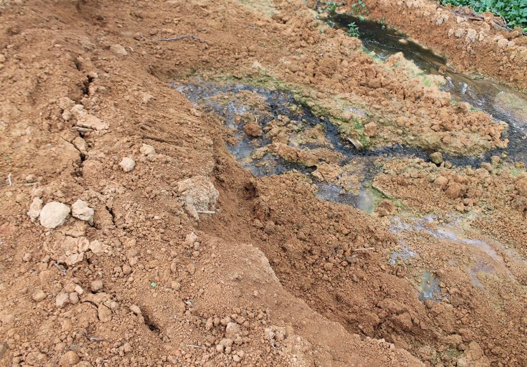 Nước thải ngấm qua bờ đất ngăn cách giữa khu xử lý thải của trại chăn nuôi với bên ngoài