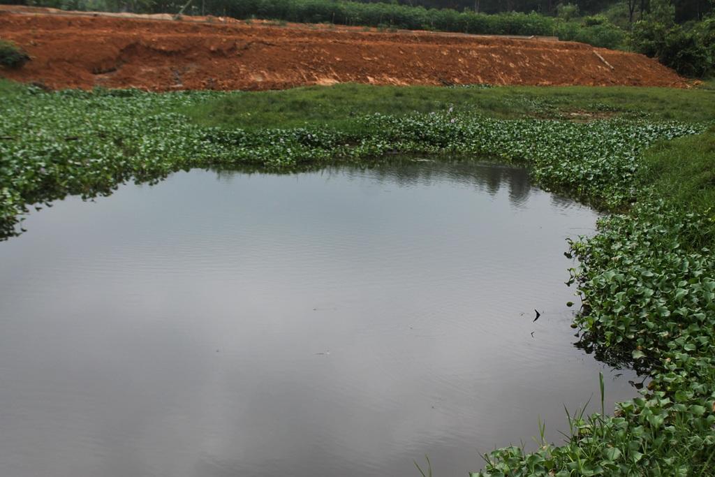 Mương dẫn nước phía dưới chân khu xử lý thải của trại chăn nuôi đen kịt.