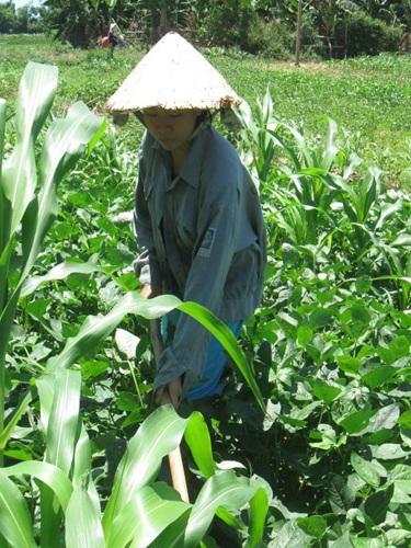 Học trò nghèo Quảng Nam vượt khó đến trường - 1