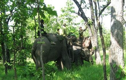 Khống chế voi rừng giữa rừng sâu
