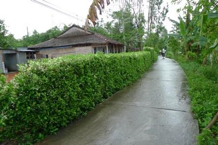 Đa số người dân ở nông thôn thường chọn cây dâm bụt để trồng