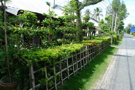 Kèm bên hàng rào xanh, người dân cũng hay dùng tre đóng thành hàng rào dã chiến như thế này