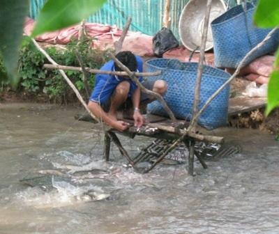 Khoan giếng lấy nước ngọt nuôi cá lóc, kiếm bạc trăm triệu