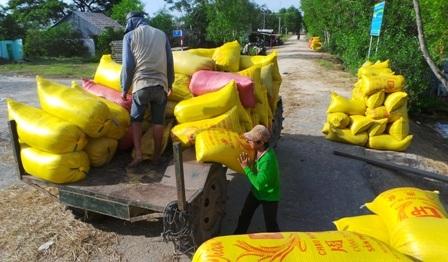 Bà con nông dân năm nay vui mừng vì lúa trúng mùa, bán được giá cao