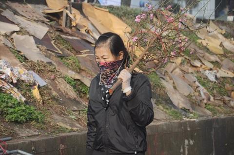 Một người buôn đem cành đào ra chợ Quảng Bán bán cho khách
