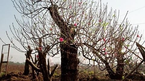 Nhiều chủ buôn cây cảnh thường có kiểu giải vía cho cây để thuận lợi trong việc bán hoặc cho thuê