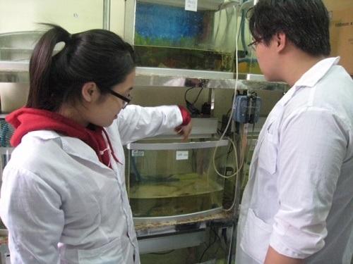 Nữ sinh Hà Nội nghiên cứu khoa học giúp người miền Tây nuôi tôm khỏe