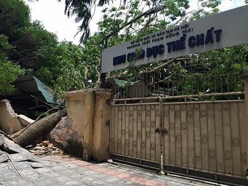 Cây lớn đổ làm đổ tường ở trường THPT Phạm Hồng Thái (Ba Đình, Hà Nội). (Ảnh: Lê Tú)